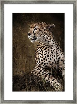 Chill Cheetah Framed Print by Mike Gaudaur