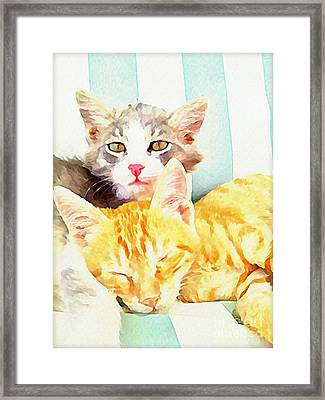 Chill Out Cats Framed Print