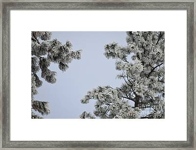 Chill Tree Framed Print