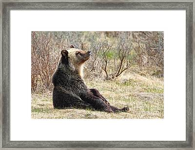 Chillaxin' Framed Print
