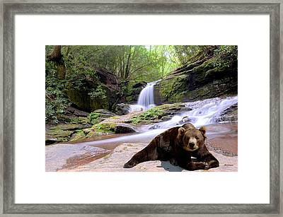 Chillin Bear Framed Print by Bob Jackson