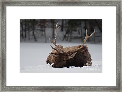 Chillin' Framed Print