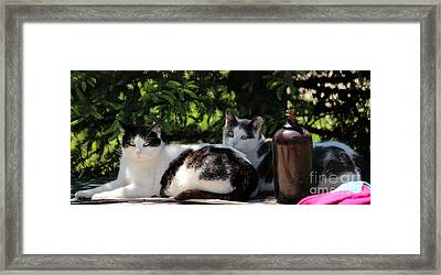 Chillin' Brothers Framed Print