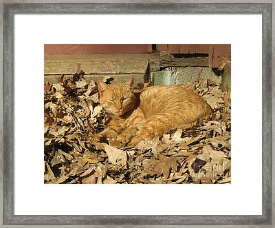 Framed Print featuring the photograph Chillin' Out by Wendy Coulson