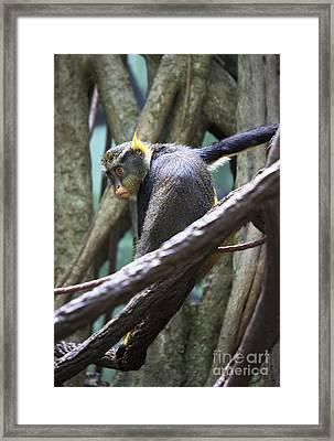 Framed Print featuring the photograph Chillin' by Rafael Quirindongo