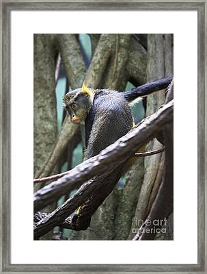 Chillin' Framed Print by Rafael Quirindongo