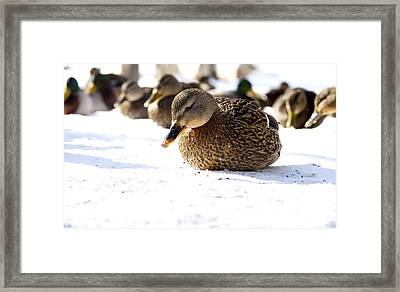 Chilling  Framed Print by Julie Smith