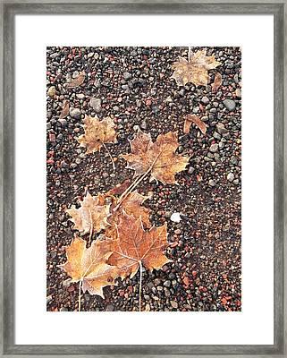 Chilly Leaves 1 Framed Print