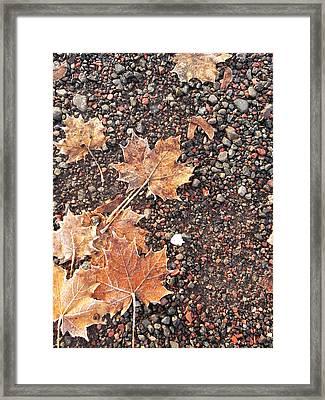 Chilly Leaves 2 Framed Print