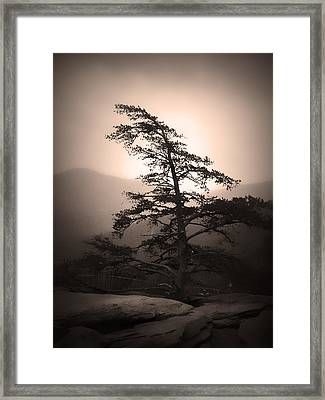 Chimney Rock Lone Tree In Sepia Framed Print