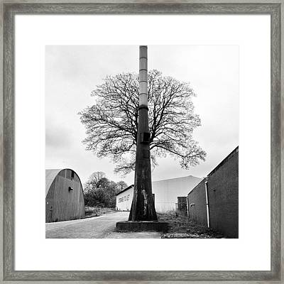 Chimney Tree Framed Print