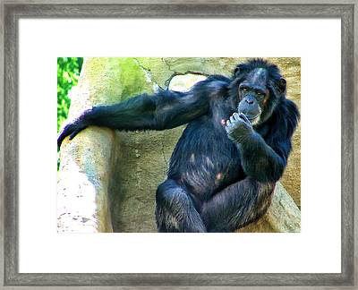 Framed Print featuring the photograph Chimp 1 by Dawn Eshelman