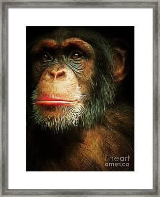 Chimp 20150210brun V3 Framed Print by Wingsdomain Art and Photography