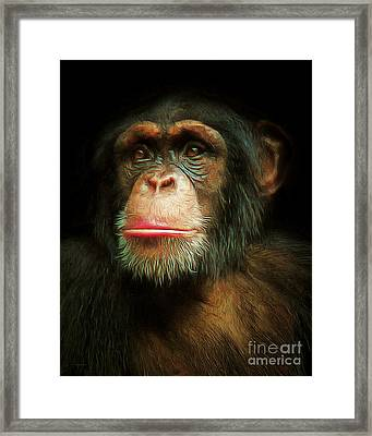 Chimp 20150210brun Framed Print by Wingsdomain Art and Photography