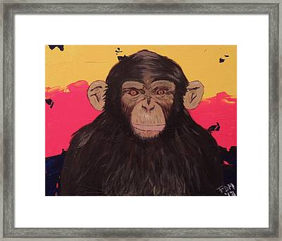 Chimp In Prime Framed Print