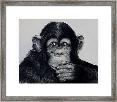 Chimp Framed Print by Jean Cormier