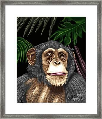 Chimp Framed Print by Karen Sheltrown
