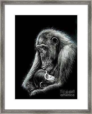 Chimp Love Framed Print by Anastasis  Anastasi
