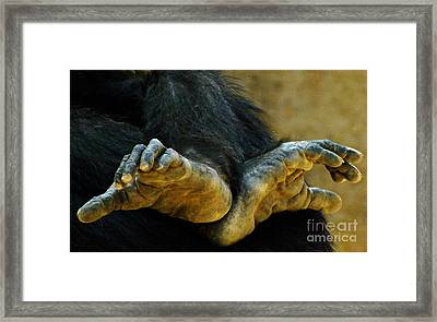 Framed Print featuring the photograph Chimpanzee Feet by Clare Bevan