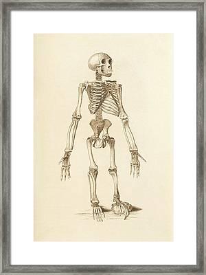Chimpanzee Skeleton Framed Print