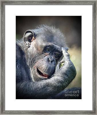 Framed Print featuring the photograph Chimpanzee Thinking by Savannah Gibbs