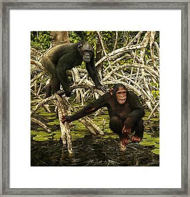 Chimpanzees In Mangrove Framed Print by Owen Bell