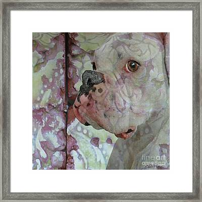 China Dog Framed Print by Judy Wood