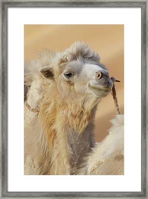 China, Gansu Province, Badanjilin Desert Framed Print by Jaynes Gallery