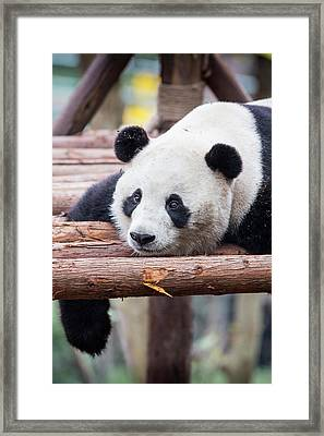 China, Sichuan Province, Chengu, Giant Framed Print by Paul Souders