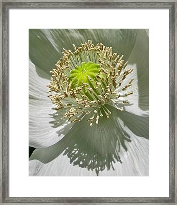 Framed Print featuring the photograph China White by David Stine