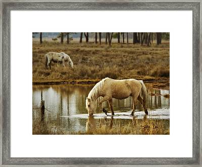 Chincoteague Gold Framed Print by Joan Davis