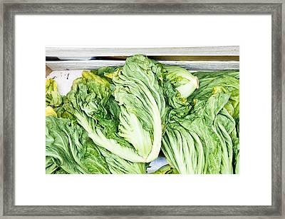 Chinese Cabbage Framed Print by Tom Gowanlock