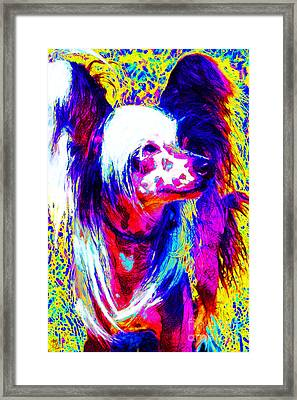 Chinese Crested Dog 20130125v1 Framed Print by Wingsdomain Art and Photography