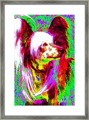 Chinese Crested Dog 20130125v2 Framed Print by Wingsdomain Art and Photography