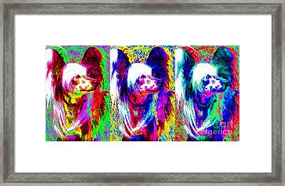 Chinese Crested Dog Three 20130125 Framed Print