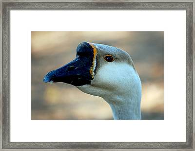 Chinese Goose Framed Print by Lisa Phillips