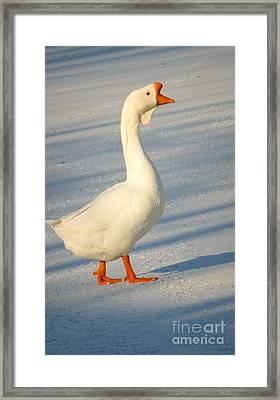 Chinese Goose Winter Framed Print by Susan Garren