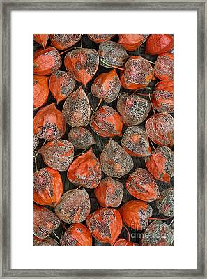 Chinese Lanterns Pattern Framed Print by Tim Gainey