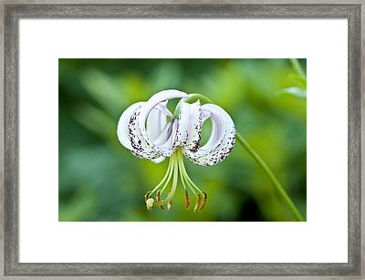 Framed Print featuring the photograph Chinese Lily by Lana Enderle