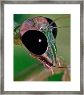 Chinese Mantis Macro Close Up #1 Framed Print
