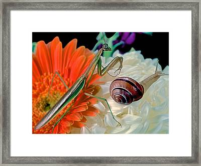 Chinese Praying Mantis Looking For Prey Framed Print by Leslie Crotty