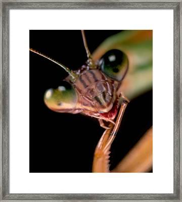 Chinese Praying Mantis Macro Closeup Portrait #10 Framed Print