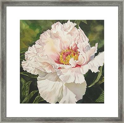 Chinese Tree Peony Framed Print by Alfred Ng