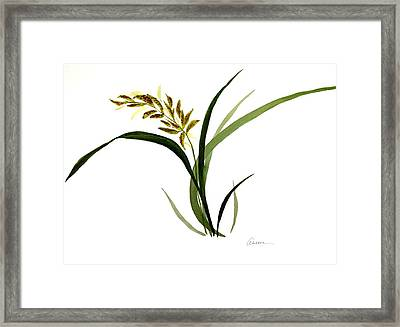 Chinese Wild Orchid #4 Framed Print by Alethea McKee