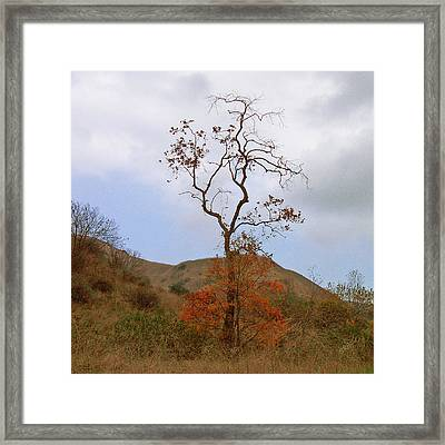 Chino Hills Tree Framed Print by Ben and Raisa Gertsberg