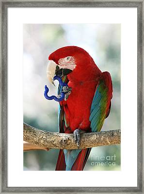 Framed Print featuring the photograph Chip by Judy Whitton