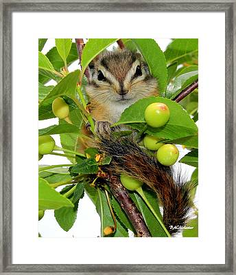 Framed Print featuring the photograph Chip Or Dale by Barbara Chichester