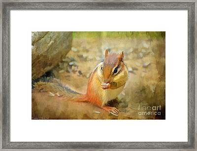Chipmonk - Digital Paint I Framed Print by Debbie Portwood