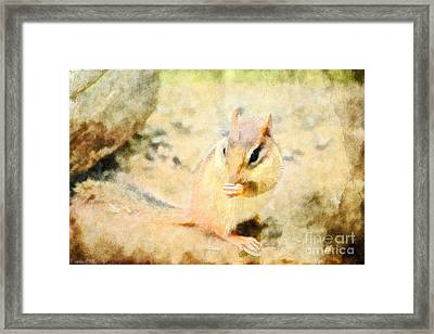 Chipmonk - Digital Paint II Framed Print by Debbie Portwood
