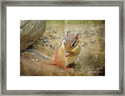 Chipmonk Framed Print by Debbie Portwood